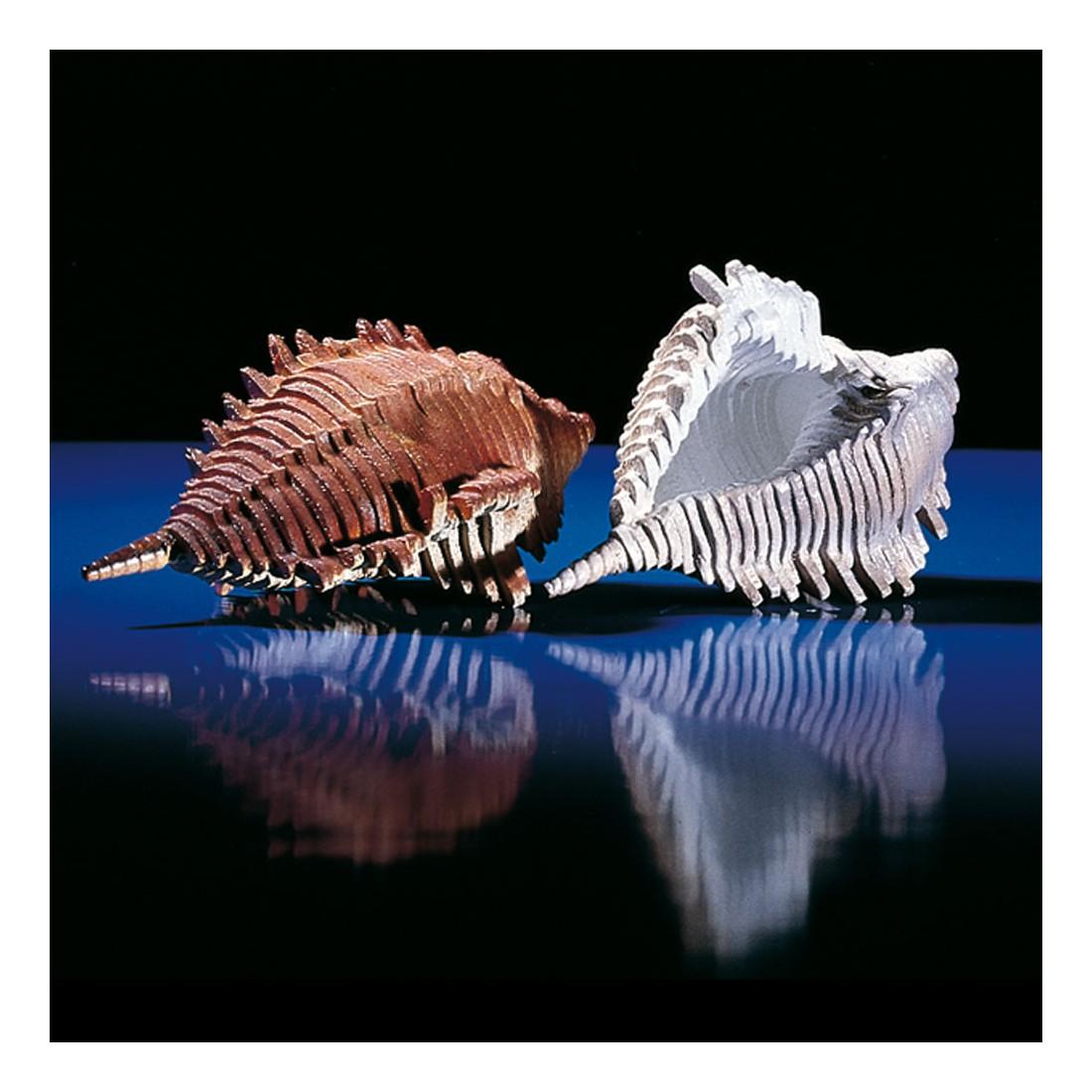 Woodline sea bugle